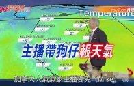 (粵)主播帶狗仔報天氣