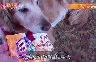 (粵)狗偷食貓零食 主人從表情 搵出「真兇」
