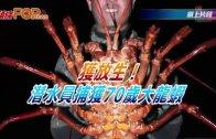 (粵)獲放生!潛水員捕獲70歲大龍蝦