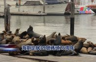 (粵)海獅定居39號碼頭25周年