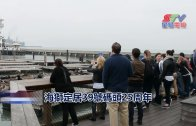 (國)海獅定居39號碼頭25周年
