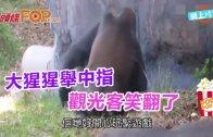 (粵)大猩猩舉中指 觀光客笑翻了