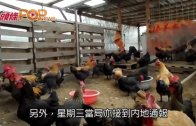 (港聞)再有三人死於流感  昆明通報禽流感新症