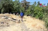 (國) 深度報導 — 矽谷森林之一
