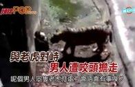 (粵)與老虎對峙 男人遭咬頭擔走