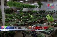 (粵)三藩市花卉市場新發展商戶感矛盾