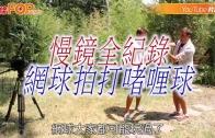 (粵)慢鏡全紀錄 綱球拍打啫喱球