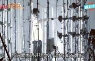 (粵)撐黃絲定搵銀?  Mr.內訌拆夥