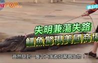 (粵)失明兼蕩失路 鱷魚驚現美國商場