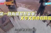 (粵)第一視角睇越野單車 又窄又斜仲有障礙