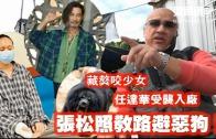 (粵)藏獒咬少女 任達華受襲入廠 張松照教路避惡狗!