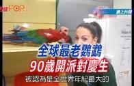 (粵)全球最老鸚鵡90歲開派對慶生
