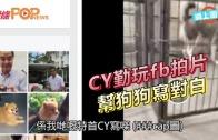 (港聞)CY勤玩fb拍片  幫狗狗寫對白
