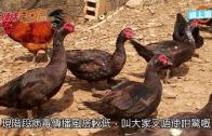 (粵)深圳26歲女染H5N6  病情危殆
