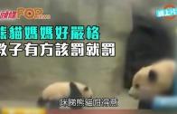 (粵)熊貓媽媽好嚴格 教子有方該罰就罰
