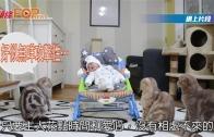 """(粵)小主人回家 貓哥哥鑑定后 認定""""弟弟"""""""