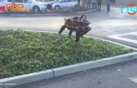 (粵)機械狗大戰真狗 邊個會嬴?