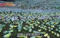 (粵)基隆星空草原 七彩膠樽砌梵高名作