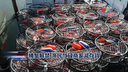 (國)捕蟹解禁 漁民忙碌商家減存貨