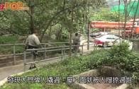 (港聞)高官獨立屋被爆 警方晒馬搜深水灣