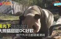 (粵)陽光下浸泡泡浴 大熊貓甜甜DC好歎