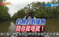 (粵)釣魚釣到鱷魚 問你驚唔驚!