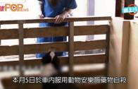 (粵) 被逼變動物屠夫  台美女獸醫死諫政府