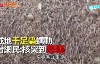 (粵) 成地千足蟲蠕動  台網民:核突到想嘔