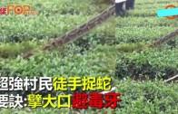 (粵)超強村民徒手捉蛇 要訣:擘大口避毒牙
