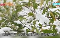 (粵)北海道氣溫得0°C  六月冬天有積雪