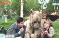 (粵)人熊同居23年 俄羅斯夫婦多咗個仔