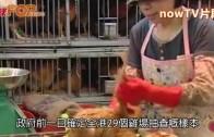 (港聞)端午有活雞食 3.5萬隻應節價貴一成