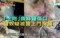 (港聞)「土炮」魚絲縫傷口  貓奴疑被警上門拘捕