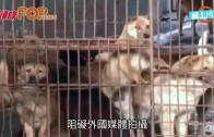 (粵)玉林狗肉節開鑼 低調殺狗阻外媒拍攝