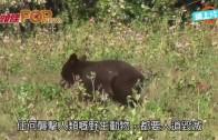 (粵)美跑手誤嚇小熊受襲 熊媽媽護子遭人道毀滅