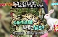 (粵)烏龜殼底加個轆 起死回生跑贏兔仔