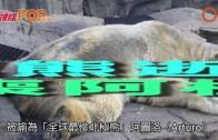 (粵)最慘北極熊逝世 30歲命喪阿根廷