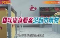 (粵)貓咪變身顧客逛超市購物