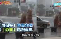 (粵)「尼伯特」風雨街頭  兩「恐龍」馬路追風