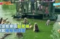 (粵)芭堤雅樂園超驚嚇 遊客被鱷魚群圍
