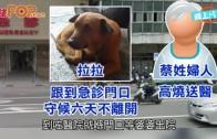 (粵)台灣忠犬拉拉 醫院外等足主人6日
