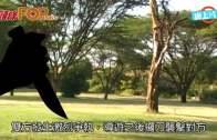(粵)內地導遊酒店爭位坐  刀捅夫婦1死1傷