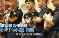 (港聞)懲教海關合作繁殖  3月大「七小福」亮相