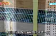 (粵)桃園機場地勤大疏忽  逾百隻動物活活熱死