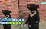 (粵)蘇州馬戲團殘忍訓練   小黑熊慘被勒頸罰企