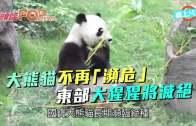 (粵)大熊貓不再「瀕危」  東部大猩猩將滅絕
