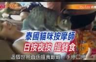 (粵)泰國貓咪按摩師   日按夜按搵餐食