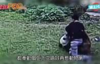 (粵)哄女跨欄挑釁熊貓  內地˝演嘢˝男爛褲敗走