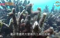 (粵)大堡礁珊瑚大量死亡 情況歷來最嚴重