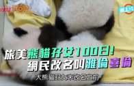 (粵)旅美熊貓孖女100日!  網民改名叫雅倫喜倫